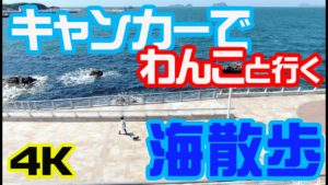 【4K】キャンピングカーで行くペットと海でお散歩旅!ひびき海の公園