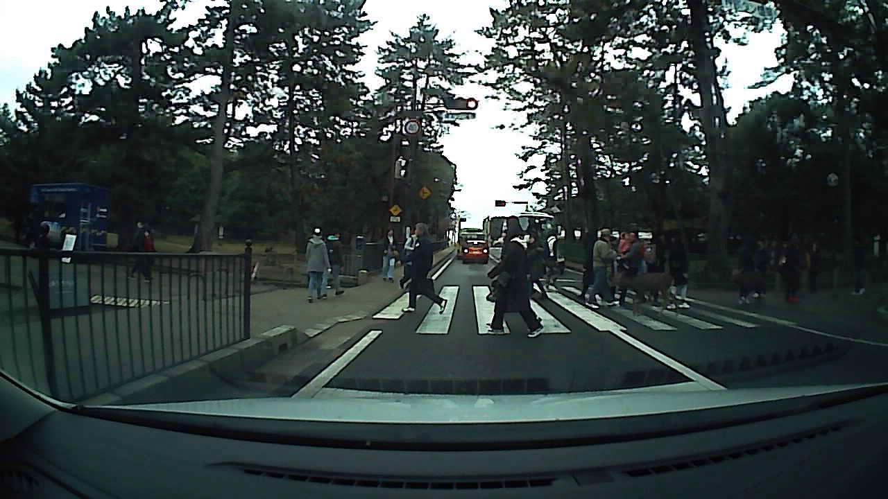 ドライブレコーダー行車記録儀 奈良公園横断歩道を渡る鹿奈良公园Deer crossing the crosswalk at Nara Park
